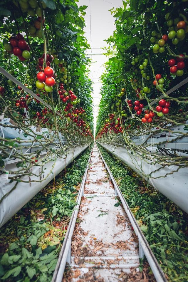 Högteknologiskt jordbruk i Sverige